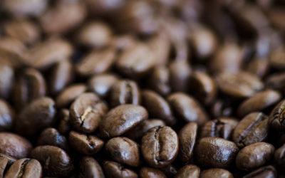 Storia del Caffè – Torrefazione Bertini